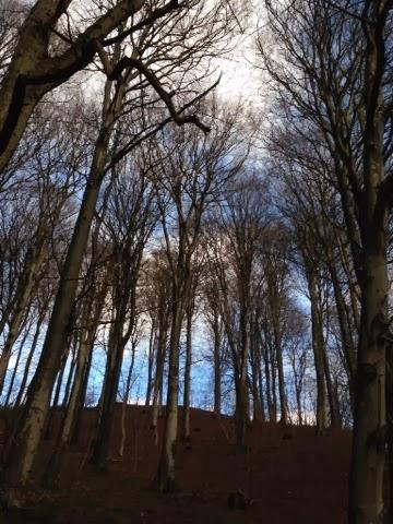 Skovtur i solskin og 8 graders varme