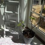 Sommerhus og solskin