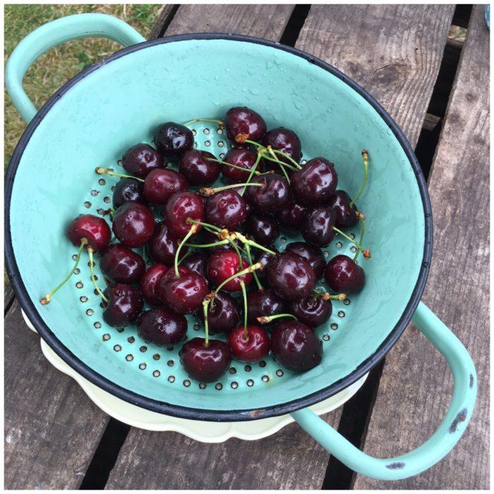 Lækre søde og næsten sorte kirsebær